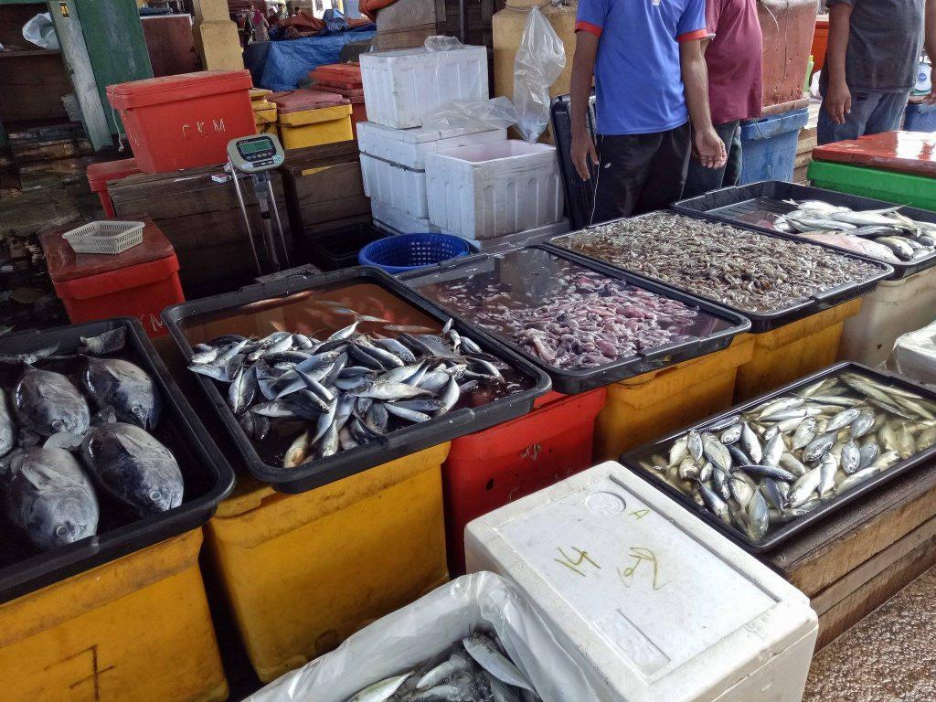 pelbagai jenis hasil tangkapan laut di jeti lkim besut terengganu