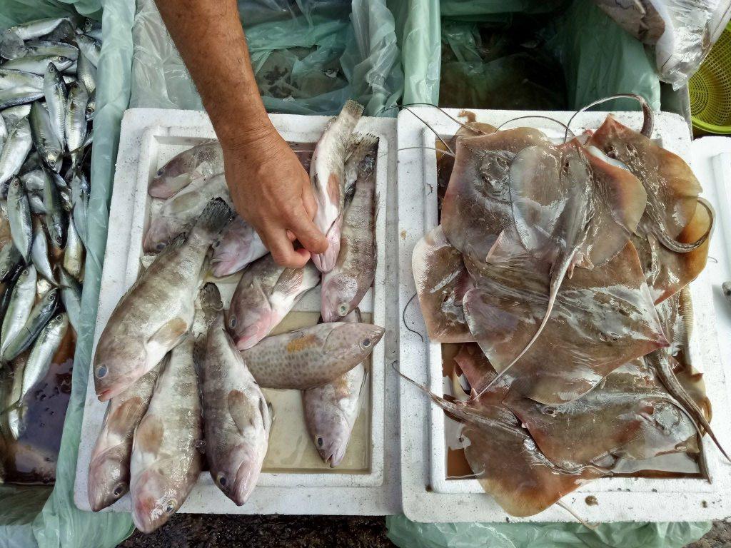 jeti ikan lkim besut