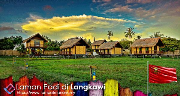 Laman-padi-Langkawi