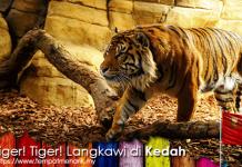 Tiger! Tiger! Langkawi