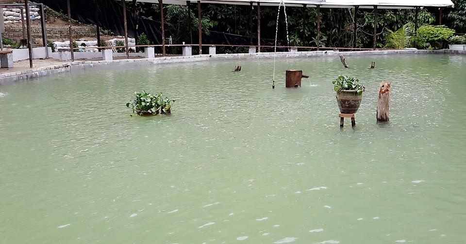 Kolam Air Panas Kerling Di Selangor Lokasi Yang Terhebat Joranpancing Kolam Pancing Kelah Tarikan Terbaru Di Lembah Kelang Of Kolam Air Panas Kerling Di Selangor Lokasi Mandi Manda Yang Sangat Nyaman Untuk Pelawat