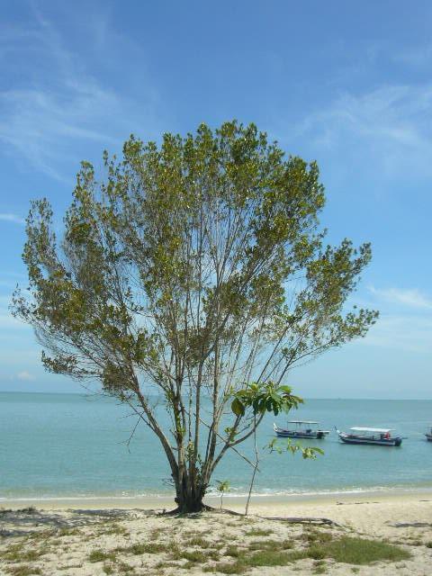 kerachut beach 1