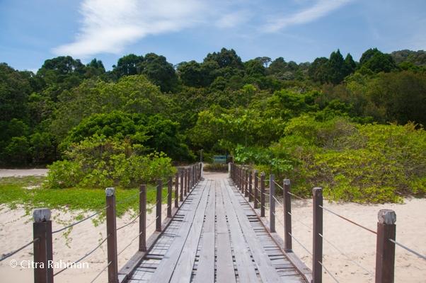 hanya ada dua lokasi berkemah di kawasan tn pulau pinang ini berkemah hanya boleh di pantai kerachut dan teluk kampi pengunjung dilarang berkemah di