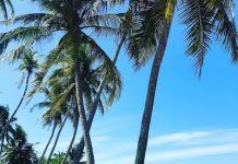 Pantai Paka Di Terengganu Tempat Menarik Yang Sangat Hebat Untuk Di Singgahi