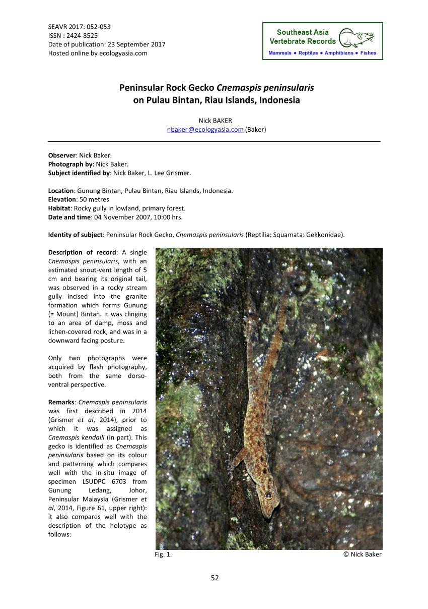 Pulau Sembilang Di Johor Menarik Pdf Systematics and Natural History Of southeast asian Rock Geckos Of Pulau Sembilang Di Johor Salah Satu Pulau Yang Hebat Untuk anda Datang