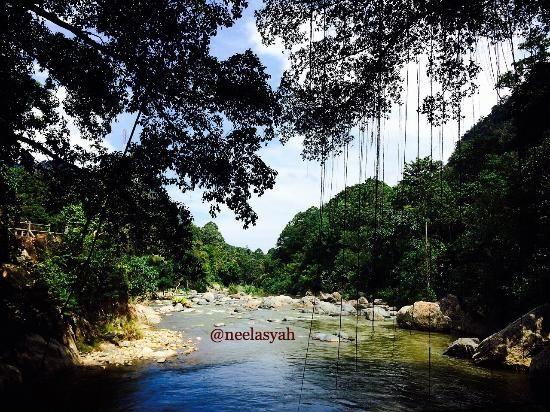 bayang root bridge pemandangan sungai ygpang dilintasi jembatan akar gambar di ambil dari tengah