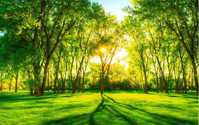 Download 600+ Wallpaper Cantik Hutan HD Terbaru