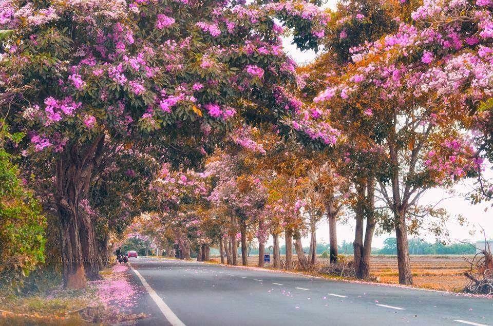 12+ gambar pemandangan alam melukis PNG