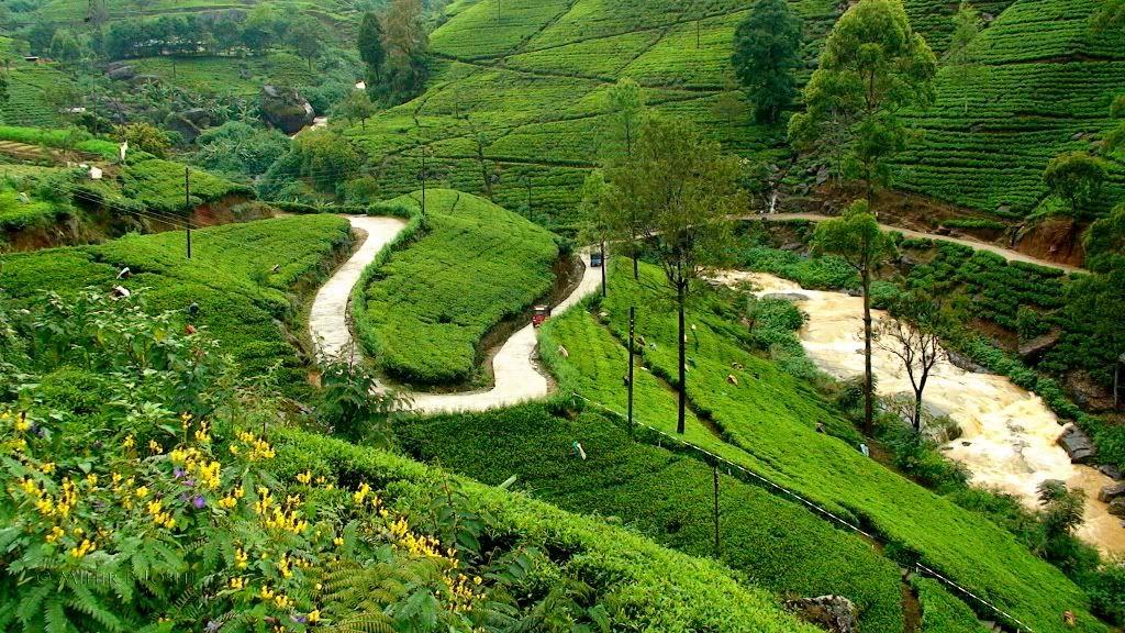 sepanjang perjalanan dari kandy menuju ke nuwara eliya tujuan di stasiun nanu oya anda akan disuguhi pemandangan alam