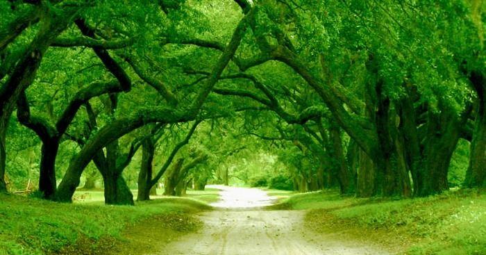 pemandangan warna hijau