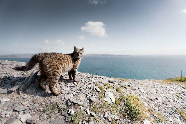 foto foto indah pemandangan hijau di irlandia pulpn com 9 jpg