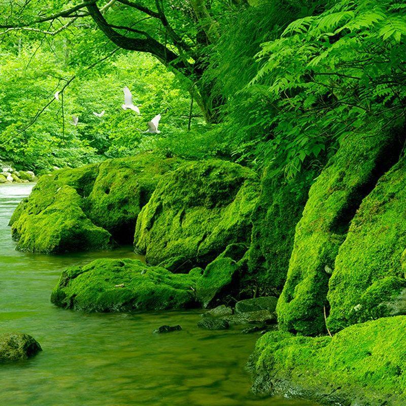 kustom 3d foto wallpaper hutan hijau pemandangan alam lukisan dinding hd ruang tamu sofa latar belakang wallpaper dekorasi rumah mural di wallpaper dari