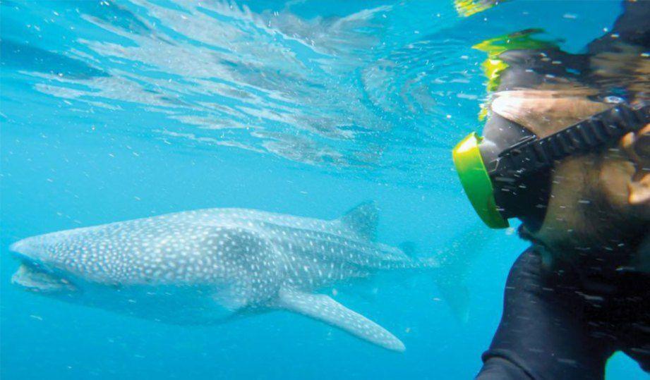 rakan penyelam merakam gambar yu paus dari permukaan laut