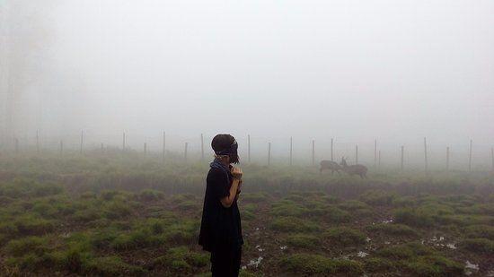 kampung cai ranca upas pemandangan indah kabut