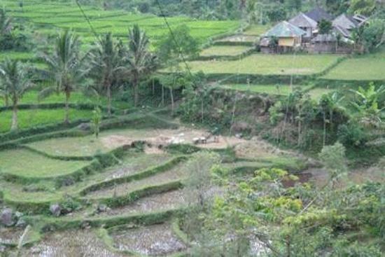Pemandangan Sawah Penting Pemandangan Sawah Picture Of Tetebatu Waterfall Lombok Tripadvisor